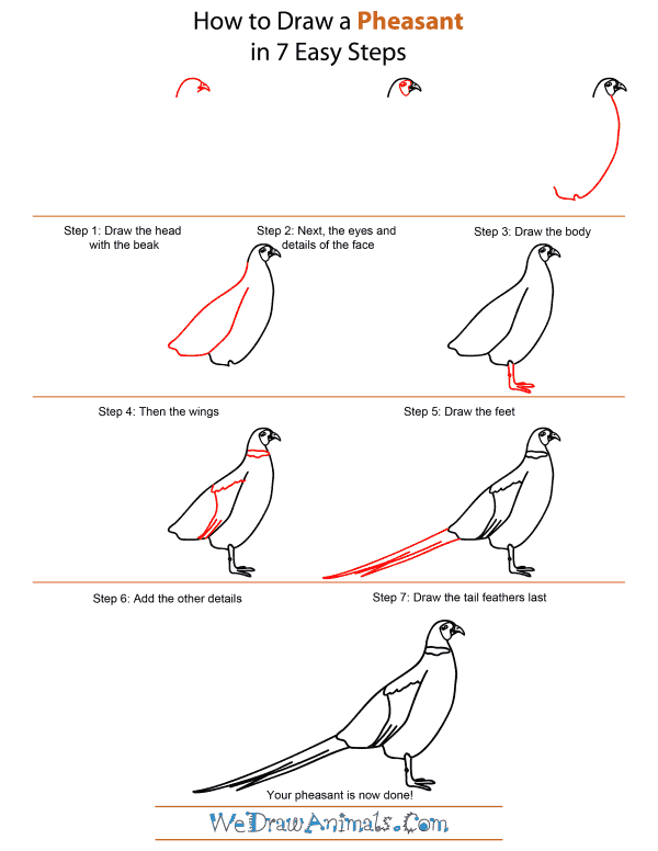 How To Draw A Pheasant - Step-by-Step Tutorial