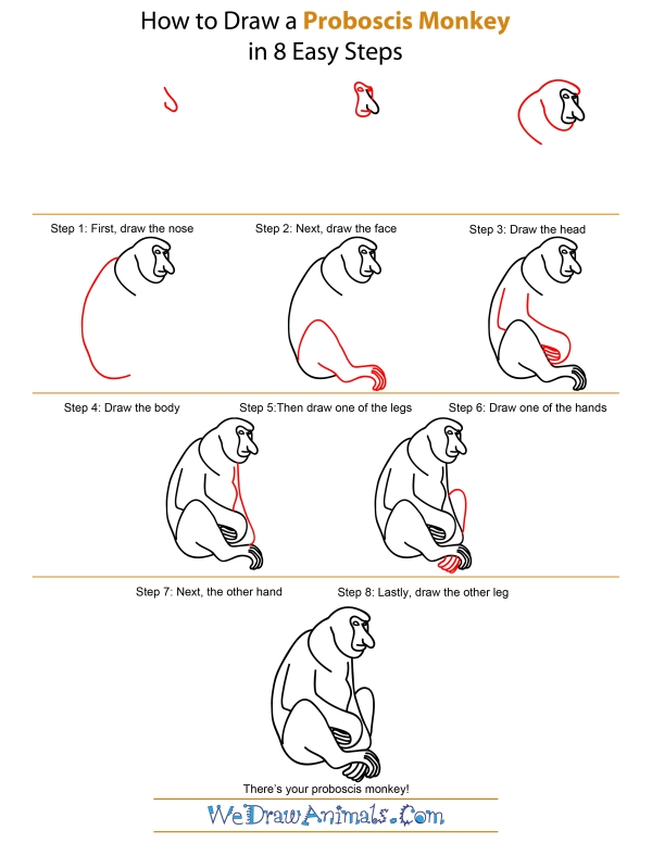 How To Draw A Proboscis Monkey - Step-by-Step Tutorial