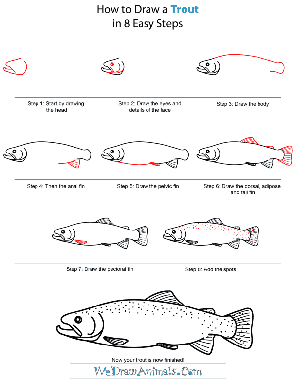 How To Draw A Trout - Step-by-Step Tutorial