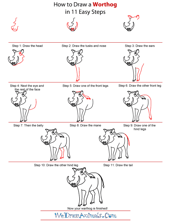 How To Draw A Warthog - Step-by-Step Tutorial