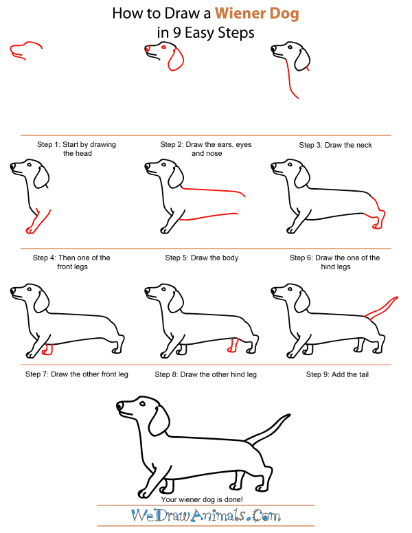 How to draw a wiener dog step by step tutorial