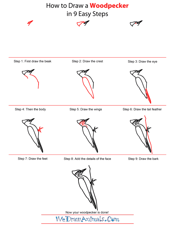 How To Draw A Woodpecker - Step-by-Step Tutorial