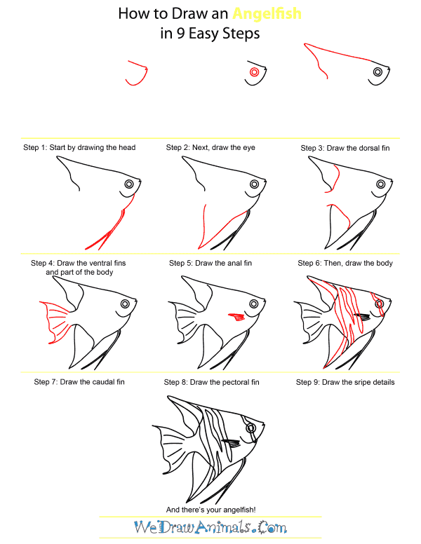 How To Draw An Angelfish - Step-by-Step Tutorial