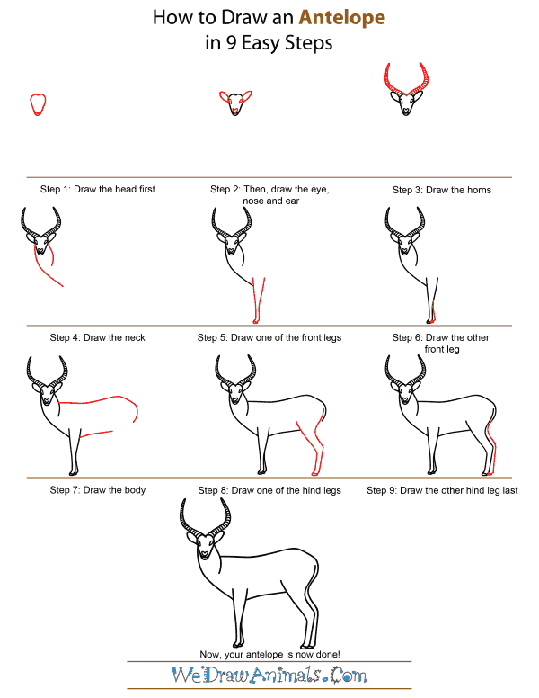 How to draw an antelope for Easy drawing websites