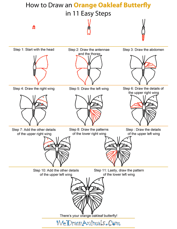 How To Draw An Orange Oakleaf Butterfly - Step-by-Step Tutorial