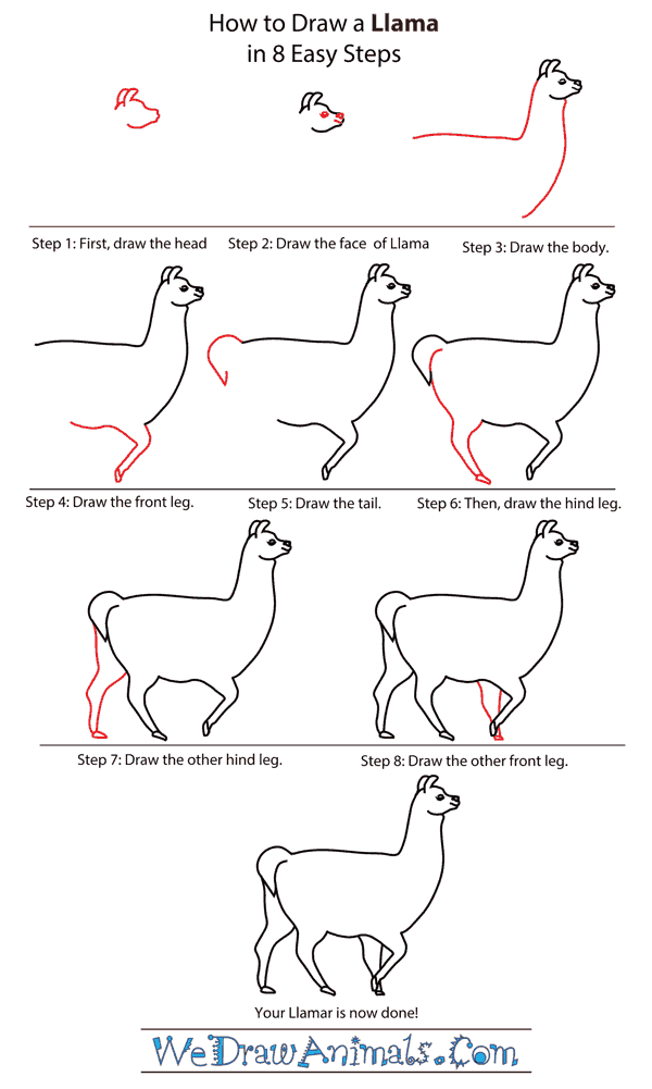 How To Draw A Llama - Step-by-Step Tutorial