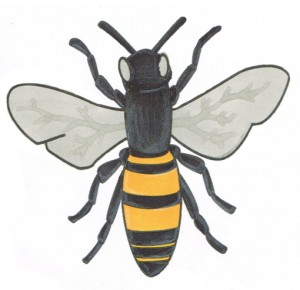 bee-coloring-tips
