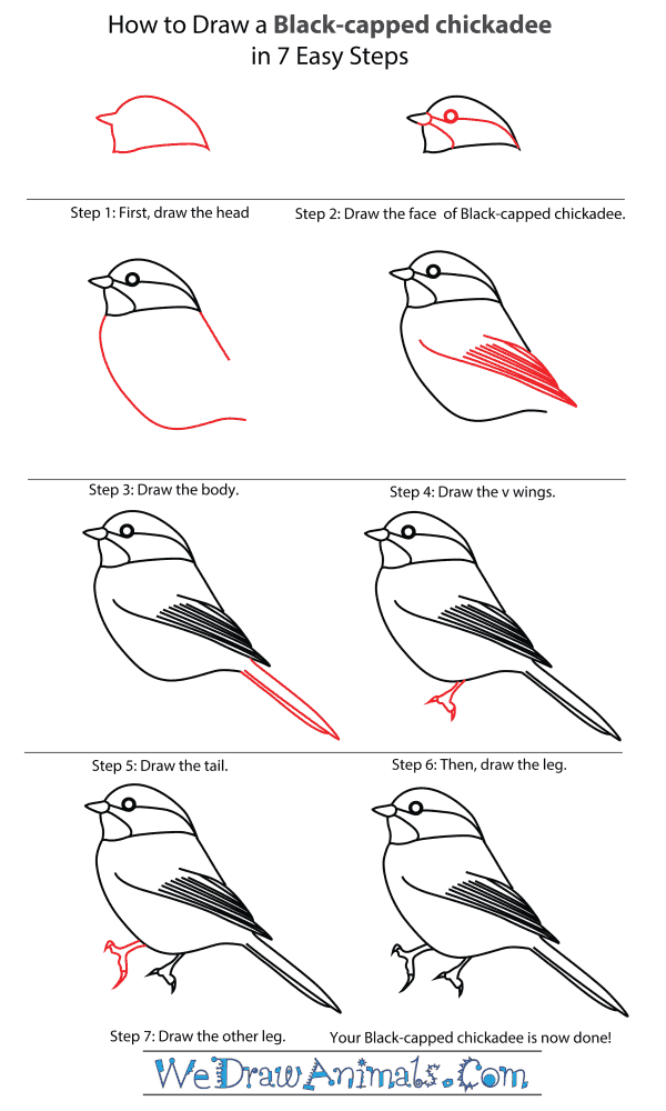 How To Draw A Black Capped Chickadee - Step-By-Step Tutorial