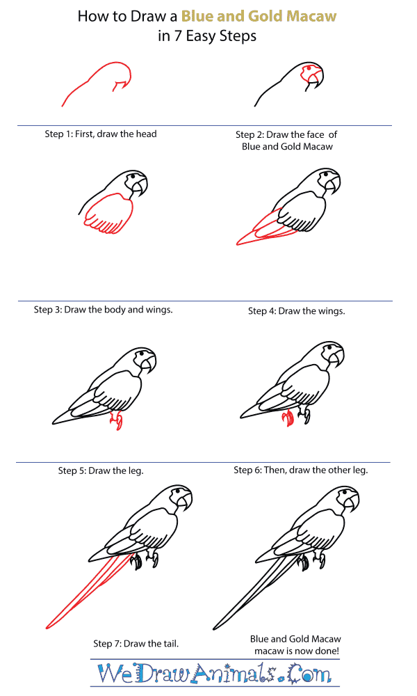 How To Draw A Blue And Gold Macaw - Step-By-Step Tutorial