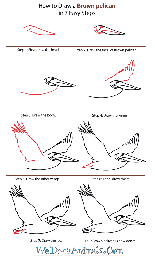 How To Draw A Brown Pelican - Step-By-Step Tutorial