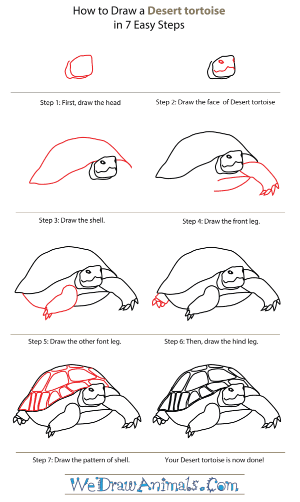 How To Draw A Desert Tortoise - Step-By-Step Tutorial