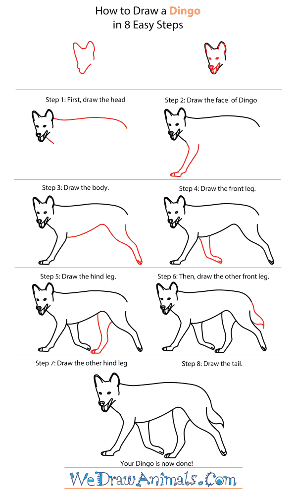How To Draw A Dingo - Step-By-Step Tutorial