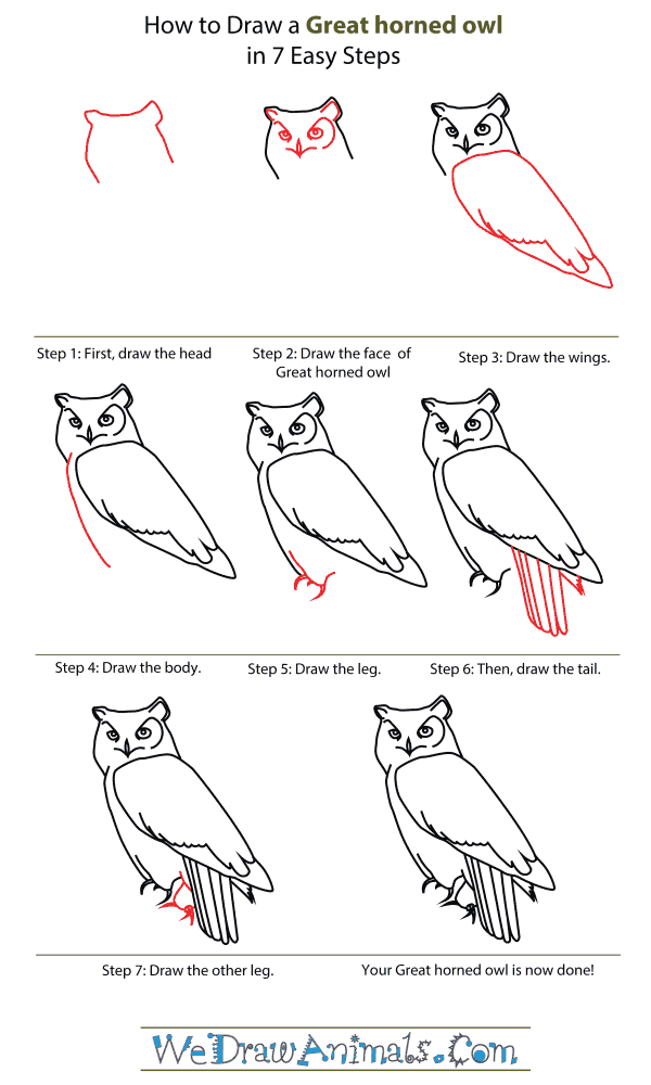 How To Draw A Great Horned Owl - Step-By-Step Tutorial