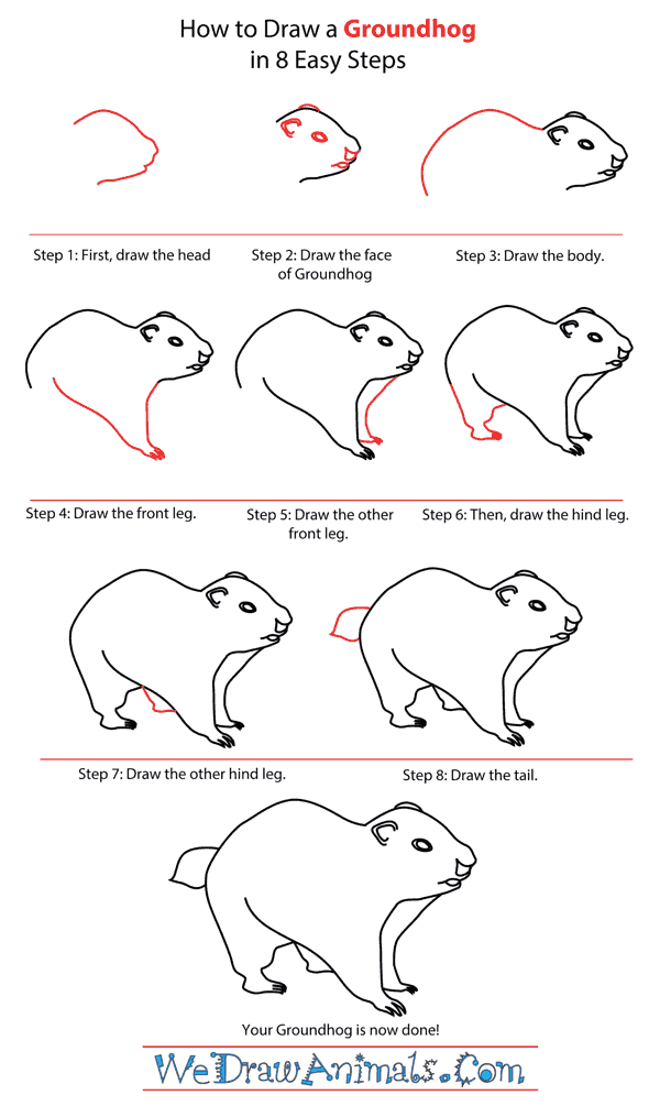 How to Draw a Groundhog - Step-by-Step Tutorial