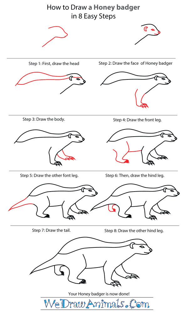 How To Draw A Honey Badger - Step-By-Step Tutorial