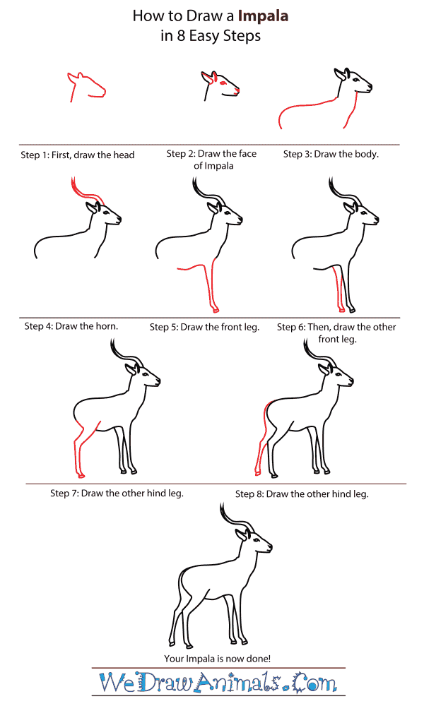 How To Draw A Impala - Step-By-Step Tutorial