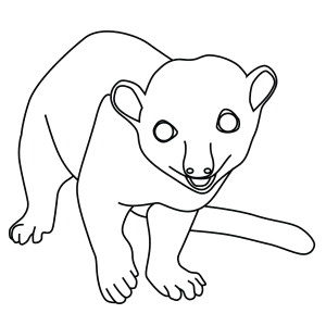 How To Draw A Kinkajou - Step-By-Step Tutorial