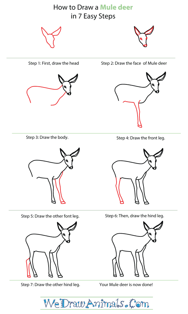 How To Draw A Mule Deer - Step-By-Step Tutorial