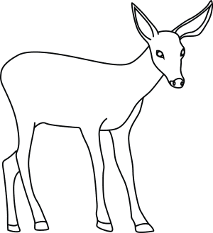 learn how to draw animals step by step page 124