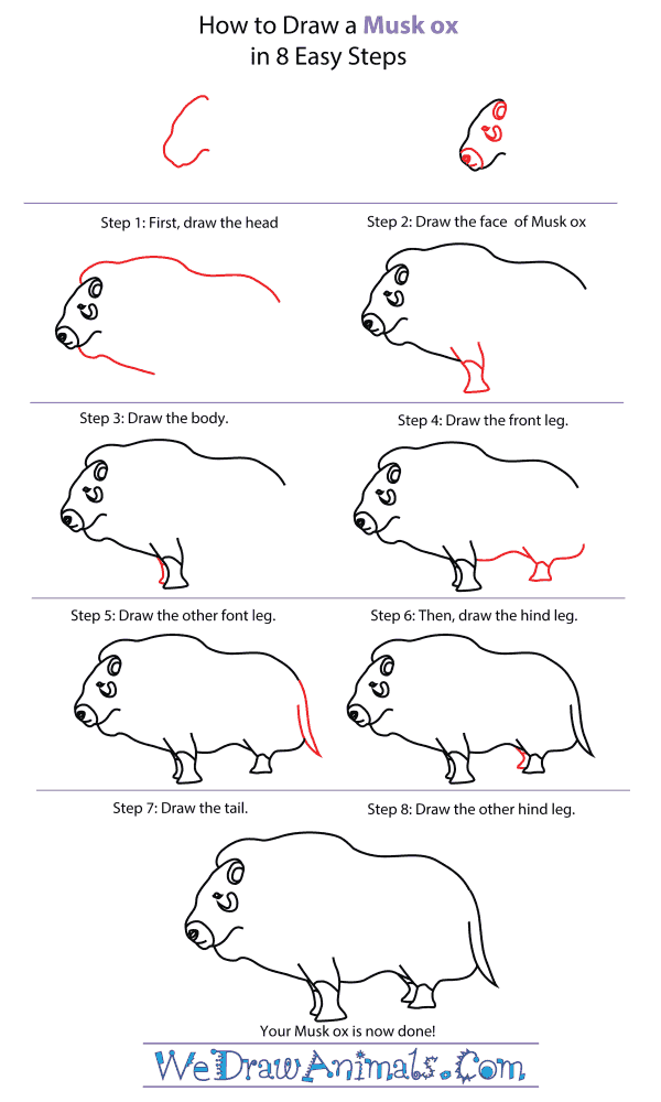 How To Draw A Musk Ox - Step-By-Step Tutorial
