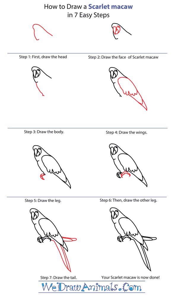 How To Draw A Scarlet Macaw - Step-By-Step Tutorial