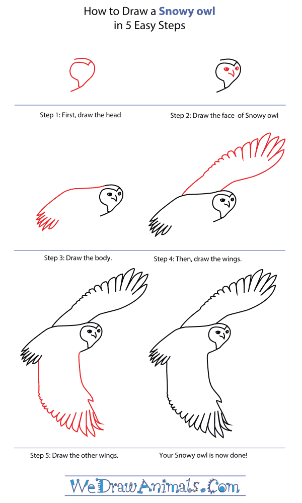 How To Draw A Snowy Owl - Step-By-Step Tutorial
