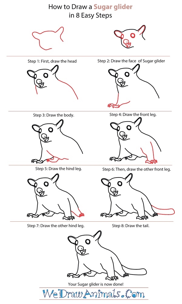 How To Draw A Sugar Glider - Step-By-Step Tutorial