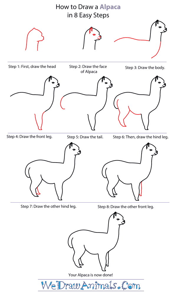 How To Draw An Alpaca - Step-By-Step Tutorial
