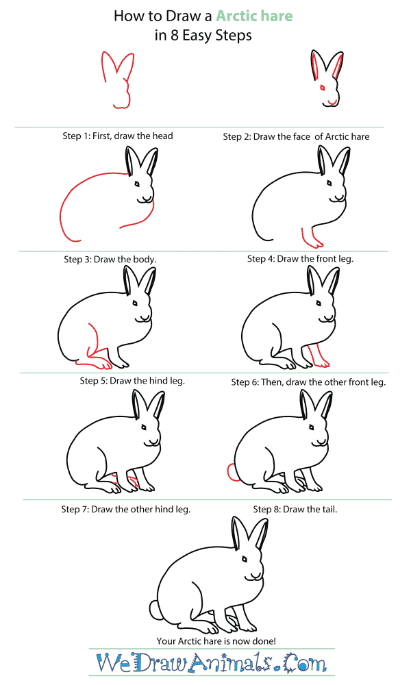 How To Draw An Arctic Hare - Step-By-Step Tutorial