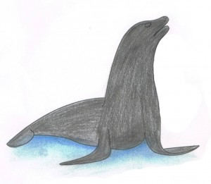 sealion-coloring-tips