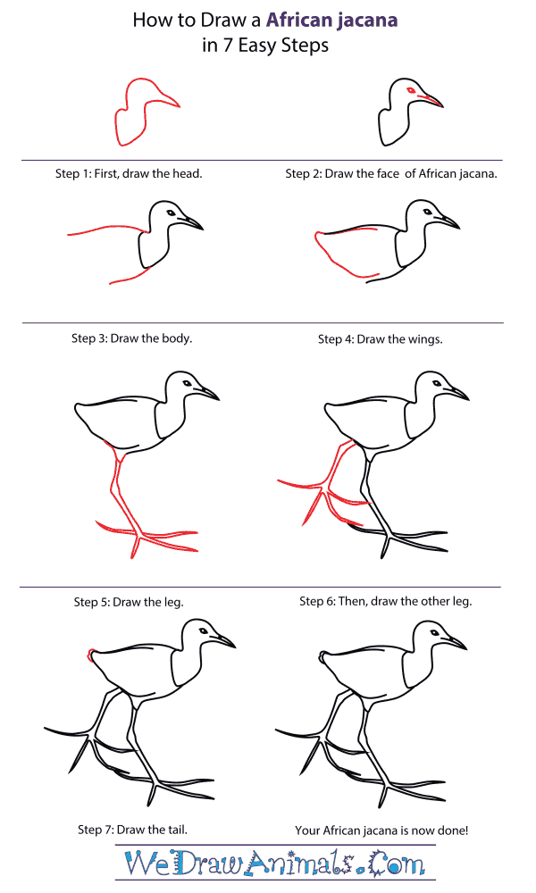 How To Draw An African jacana - Step-By-Step Tutorial