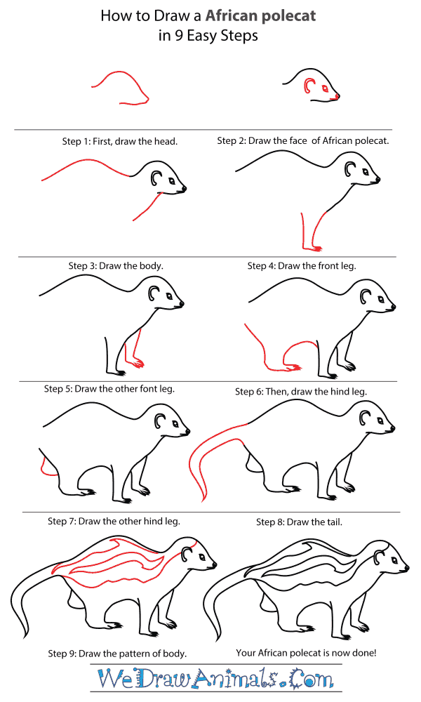 How To Draw An African polecat - Step-By-Step Tutorial