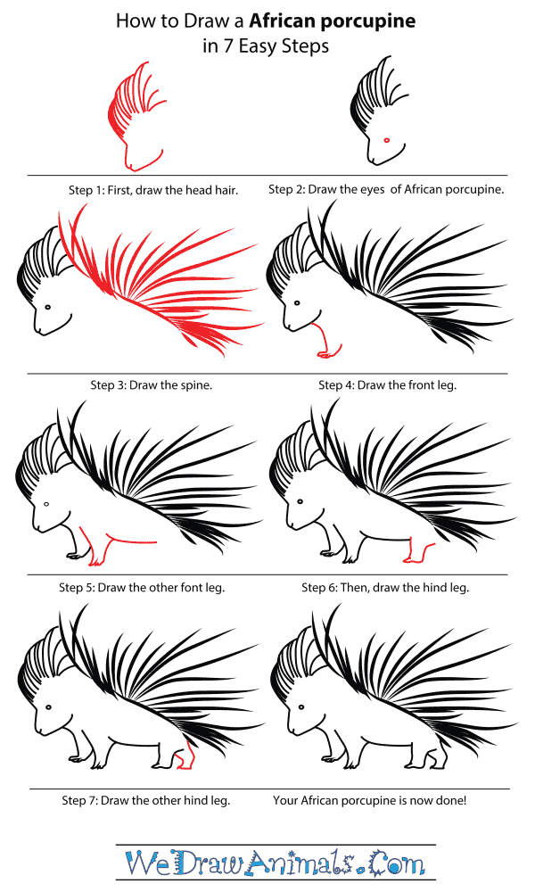 How To Draw An African porcupine - Step-By-Step Tutorial