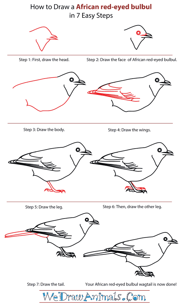 How To Draw An African red-eyed bulbul - Step-By-Step Tutorial