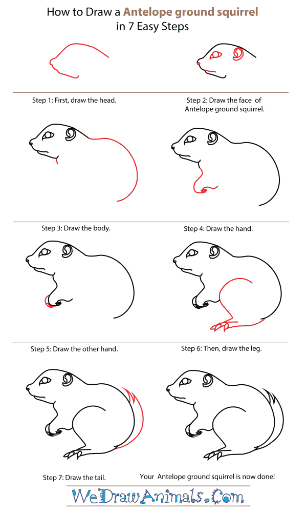 How To Draw An Antelope ground squirrel - Step-By-Step Tutorial