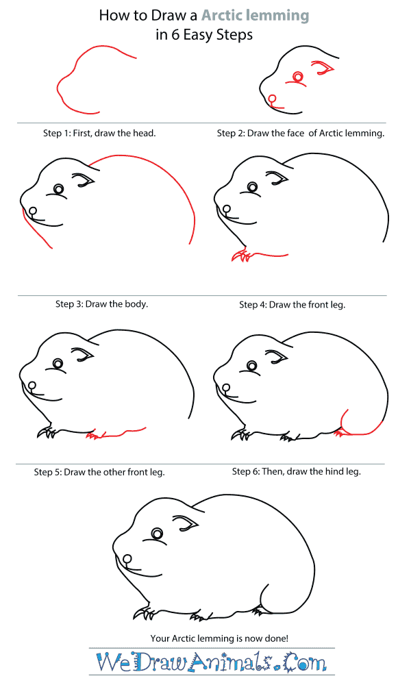 How To Draw An Arctic lemming - Step-By-Step Tutorial