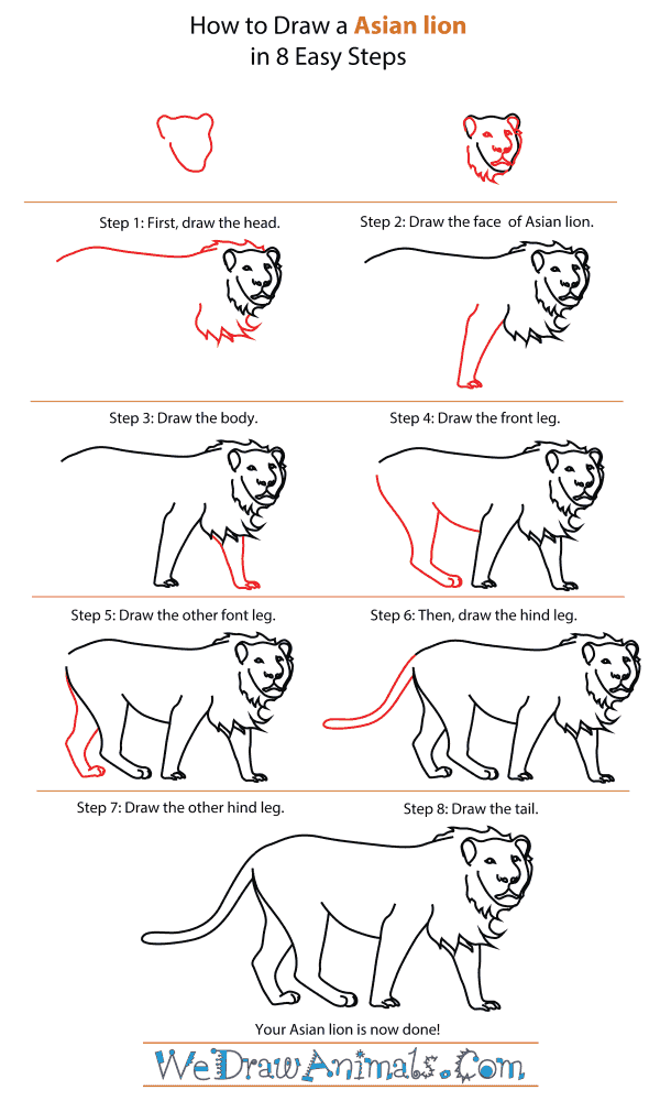 How To Draw An Asian lion - Step-By-Step Tutorial