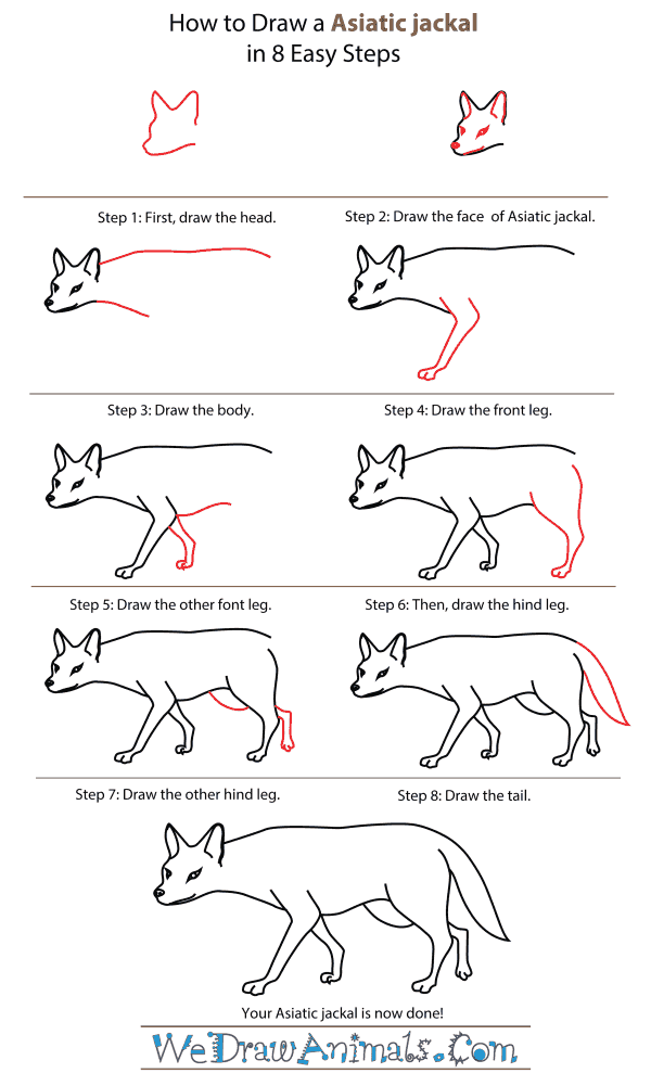 How To Draw An Asiatic jackal - Step-By-Step Tutorial