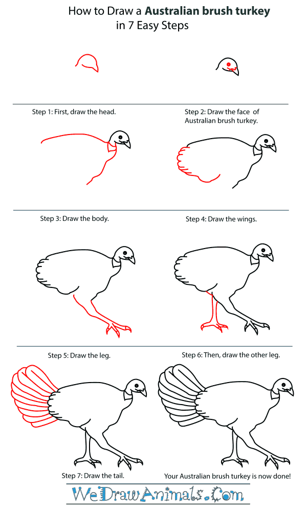 How To Draw An Australian brush turkey - Step-By-Step Tutorial