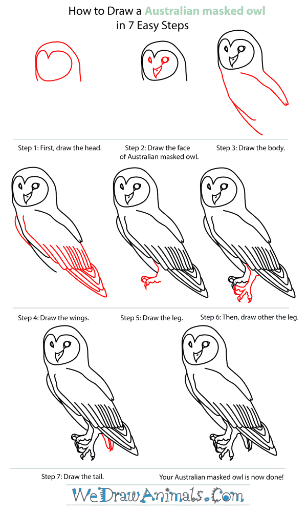 How To Draw An Australian masked owl - Step-By-Step Tutorial