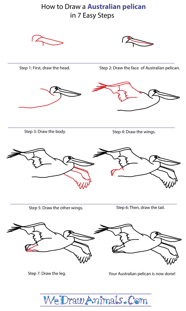 How To Draw An Australian pelican - Step-By-Step Tutorial