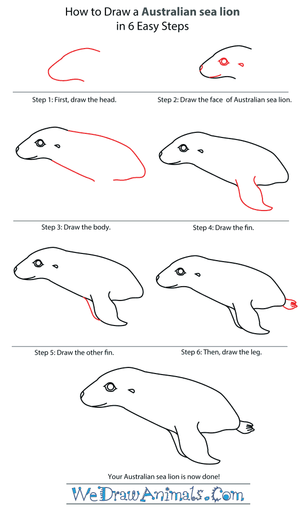 how to draw an australian sea lion step by step tutorial