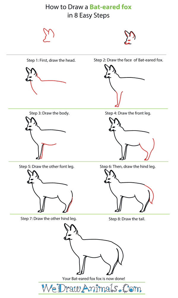 How To Draw A Bat-eared fox - Step-By-Step Tutorial