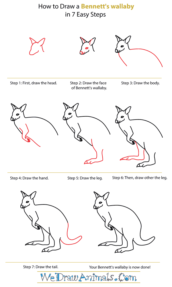 How To Draw A Bennett's wallaby - Step-By-Step Tutorial