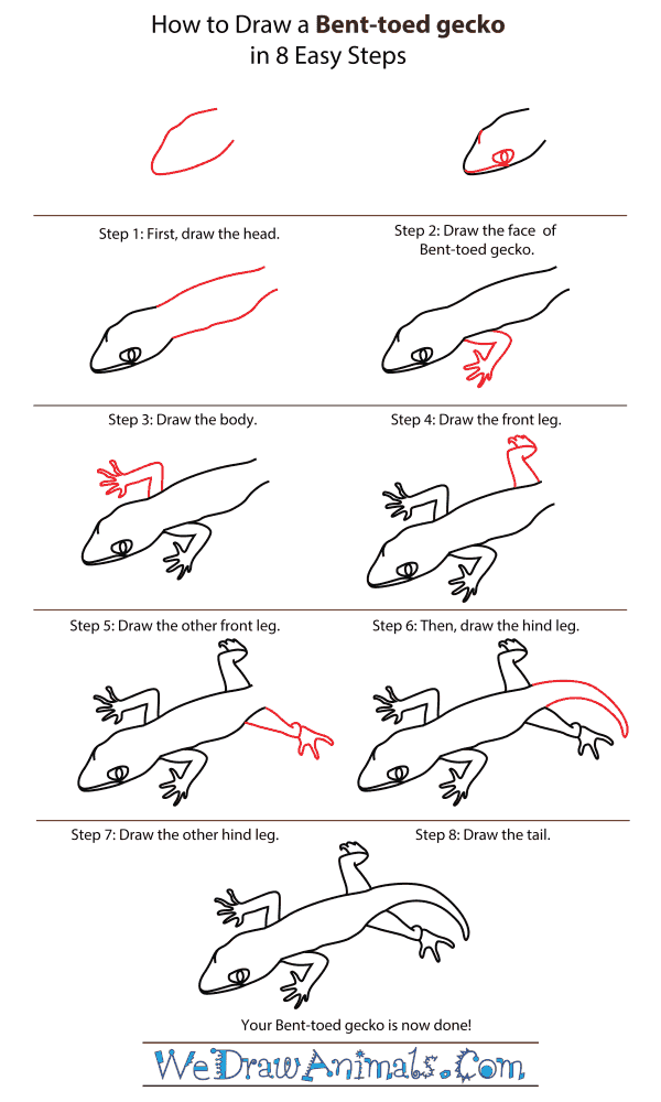 How To Draw A Bent-toed gecko - Step-By-Step Tutorial