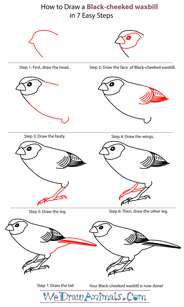 How To Draw A Black-Cheeked Waxbill - Step-By-Step Tutorial
