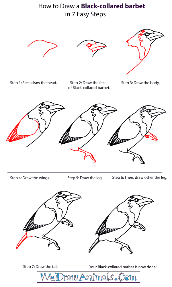 How To Draw A Black-Collared Barbet - Step-By-Step Tutorial