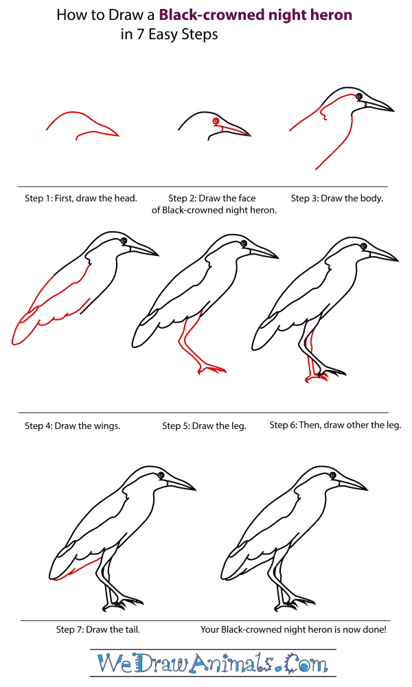 How To Draw A Black-Crowned Night Heron - Step-By-Step Tutorial