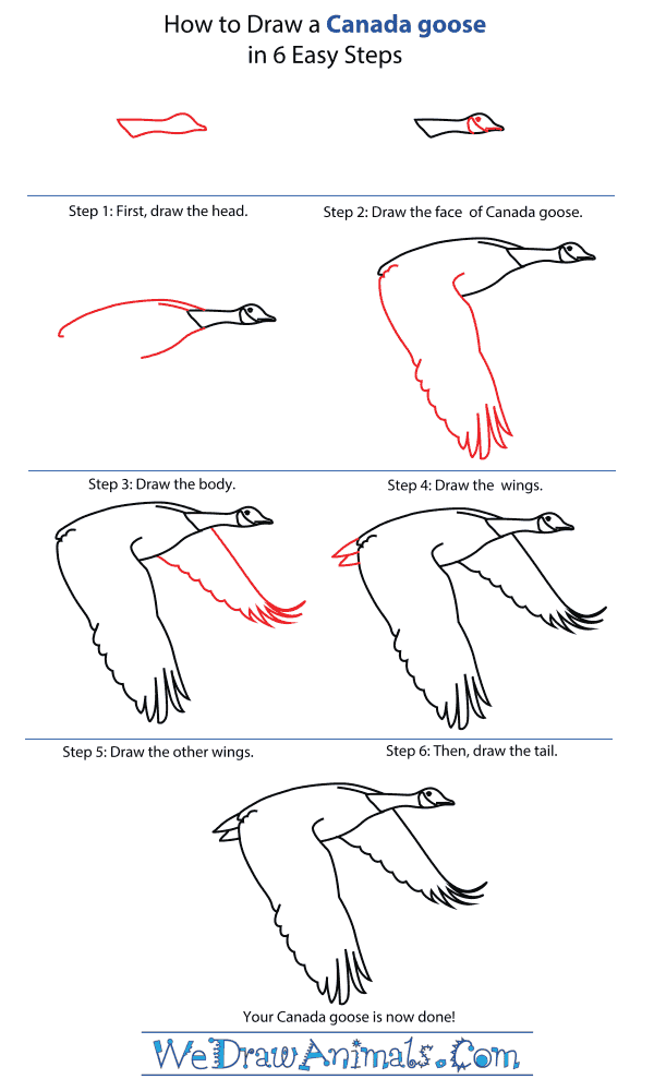 How To Draw A Canada Goose - Step-By-Step Tutorial