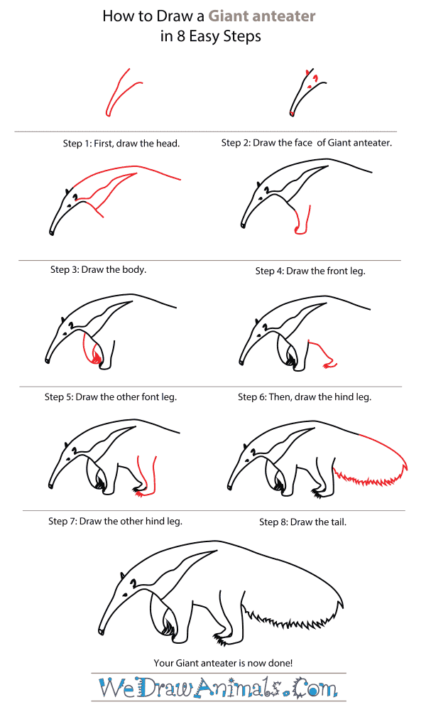 How To Draw A Giant anteater - Step-By-Step Tutorial